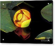 Lily Reflection Acrylic Print