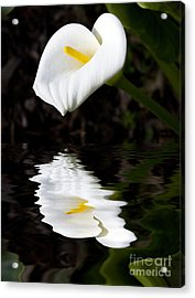 Lily Reflection Acrylic Print by Avalon Fine Art Photography
