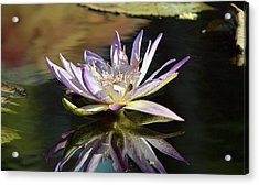 Lily Reflections Acrylic Print