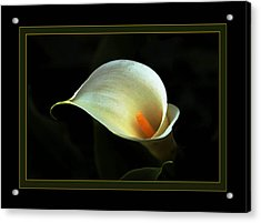 Lily Acrylic Print by Richard Gordon