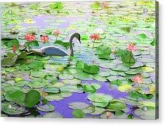 Acrylic Print featuring the photograph Lily Swan by Carol Kinkead