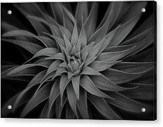 Lily Swirl Acrylic Print