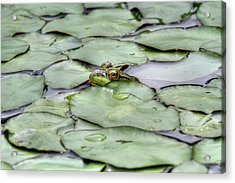 Lily The Frog Acrylic Print