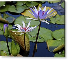 Acrylic Print featuring the photograph Lily Trio by Judy Vincent
