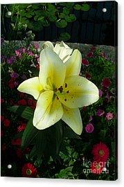 Lily Upon The Pond Acrylic Print