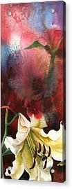 Lily With Red Acrylic Print by Alfred Ng