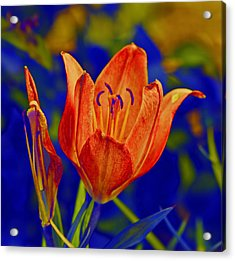 Acrylic Print featuring the photograph Lily With Sabattier by Bill Barber