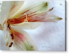 Acrylic Print featuring the digital art Lily With Texture by Kae Cheatham