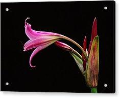 Lily X Acrylic Print