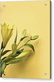 Lily Yellow Acrylic Print