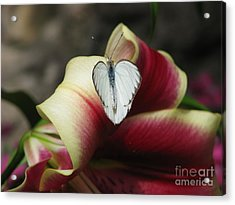 Lily's Lover Acrylic Print