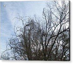Limbs In Air Acrylic Print by Jewel Hengen