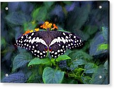 Lime Swallow Tail Acrylic Print by James Steele