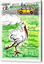 Limping Ibis Acrylic Print by Carol Allen Anfinsen