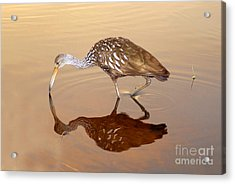 Limpkin In The Mirror Acrylic Print by David Lee Thompson