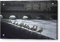 Line Of Birds Acrylic Print