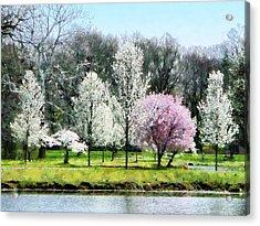 Line Of Flowering Trees Acrylic Print by Susan Savad