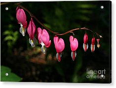 Line Of Hearts Acrylic Print