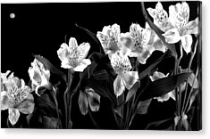 Lined Up Acrylic Print by Diane Reed