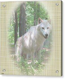 Linen Wolf Pose Acrylic Print by Debra     Vatalaro