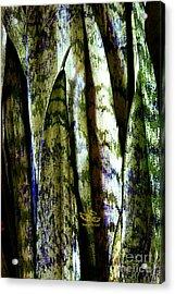 Lines Acrylic Print