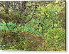 Lines In The Green Acrylic Print by Tim Haynes