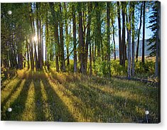 Acrylic Print featuring the photograph Lines by Mary Hone