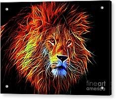 Lion 12818 Acrylic Print