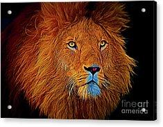 Lion 16218 Acrylic Print