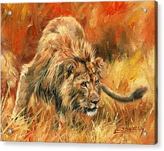 Acrylic Print featuring the painting Lion Alert by David Stribbling