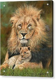 Lion And Cub Acrylic Print
