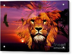 Lion And Eagle In A Sunset Acrylic Print