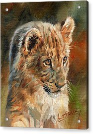 Acrylic Print featuring the painting Lion Cub Portrait by David Stribbling