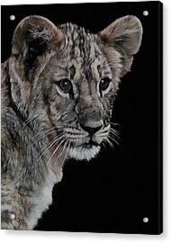 Lion Cub Portrait Acrylic Print by Ernie Echols