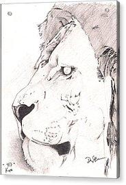 Lion Acrylic Print by Darryl Barnes