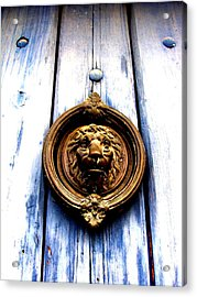 Lion Dreams Acrylic Print