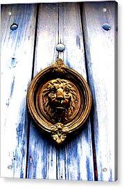 Acrylic Print featuring the photograph Lion Dreams by Michelle Dallocchio