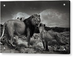 Acrylic Print featuring the photograph Lion Family by Christine Sponchia
