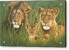 Lion Family Acrylic Print by Henry  Frison
