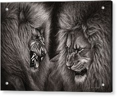 Lion Fight Acrylic Print