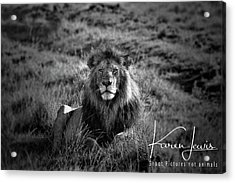 Acrylic Print featuring the photograph Lion King by Karen Lewis