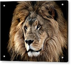 Lion King Of The Jungle 2 Acrylic Print