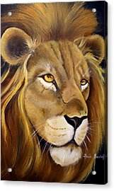 Lion Male Acrylic Print by Ansie Boshoff