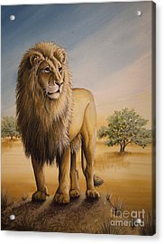 Lion Of Africa Acrylic Print