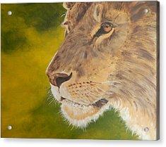 Lion Portrait Acrylic Print