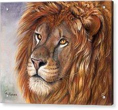 Lion Portrait Acrylic Print by Svetlana Ledneva-Schukina