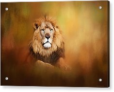 Lion - Pride Of Africa I - Tribute To Cecil Acrylic Print