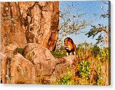 Lion Pride Acrylic Print by Paul Bartoszek