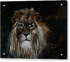 Sargas The Lion Acrylic Print by Barbie Batson