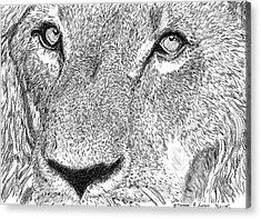 Lion Sketch Acrylic Print